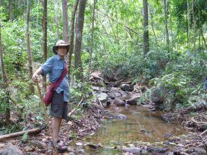 stream-garden-tom