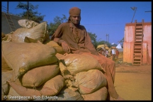 Worker in the dye industry, standing behind a pile of sacks.