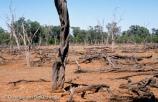Tree clearance near Lightning Ridge, New South Wales, Australia.