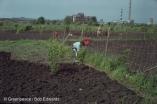 Growing crops near a chlorine plant, Republic of Chuvashia, Russia.